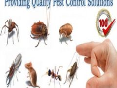 cockroach removal and treatment in Dubai